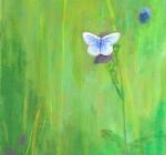 pale-blue-butterfly_w