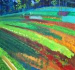Colors in the Karen Farm